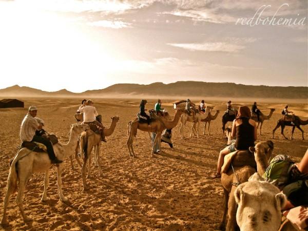 zagora_roadtrip15_camelsleaving